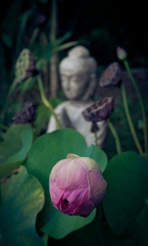 Meditation Blume